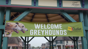 Welcome - Greyhounds in Gettysburg